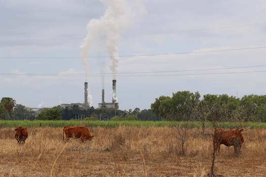 Image of cattle in paddock